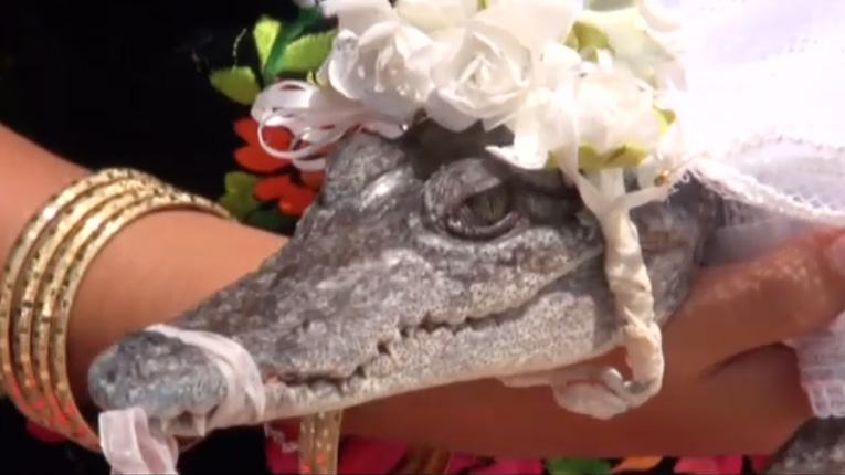 crocodile bride corecodile